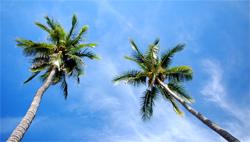 Auswandern: Leben unter Palmen